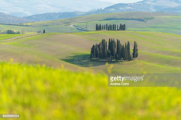 Valdorcia, Siena, Tuscany. The cypress trees of Orcia valley.