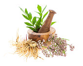Medicinal plant Valeriana officinalis collected in austria
