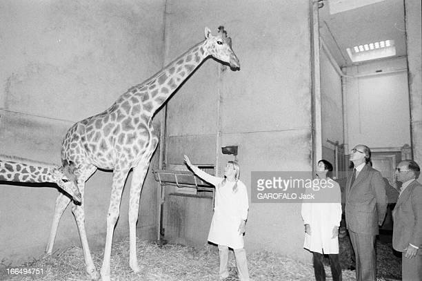 Valery Giscard D'Estaing Visiting His Daughter Jacinthe Guibout At The Vincennes Zoo Au Zoo de Vincennes le 31 juillet 1980 le président Valéry...