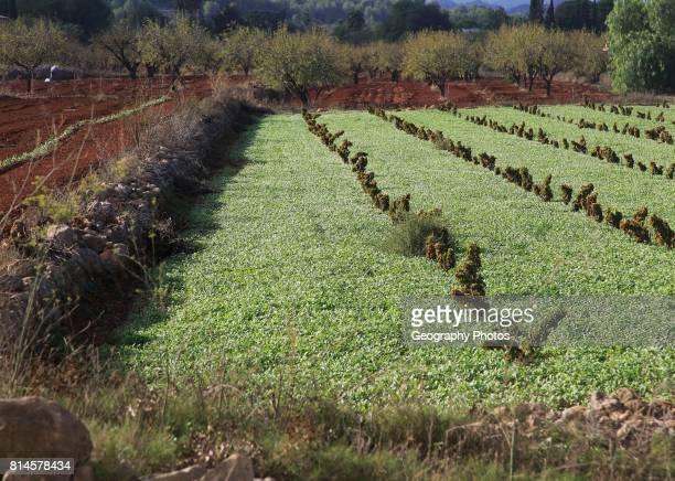 Valley farmland with red terra rosa soil Lliber Marina Alta Alicante province Spain