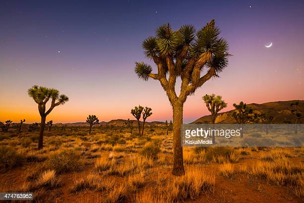 Few trees look more Seuss-ish than the Joshua Tree, and the best place to see them (not surprisingly) is Joshua Tree National Park in southern California. The average lifespan for these trees is thought to be about 150 years, although some of the largest ones in the park could be much older.