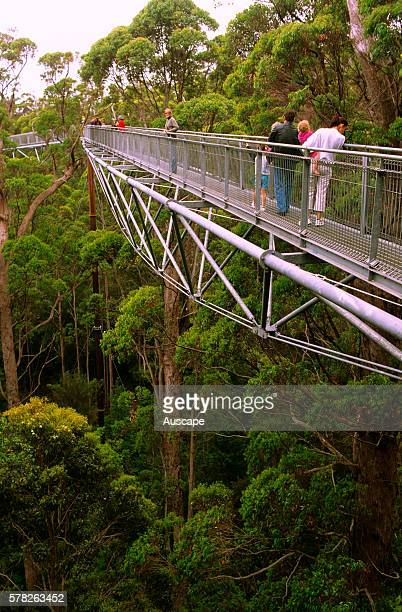 Valley of the Giants Treetop Walk steel trusssupported walkway in forest of Red tingle WalpoleNornalup National Park Western Australia Australia