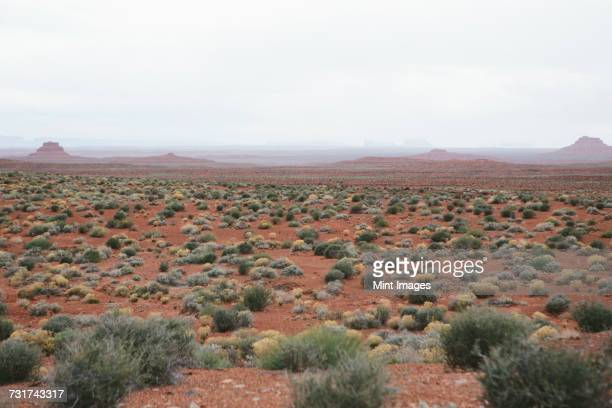 Valley of the Gods is in the heart of Bears Ears National Monument, a desert plain with scrub plants.