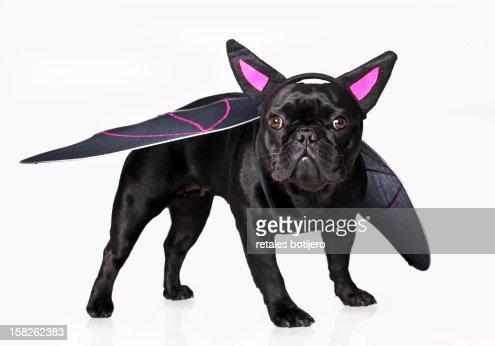 vampire dog : Stock Photo
