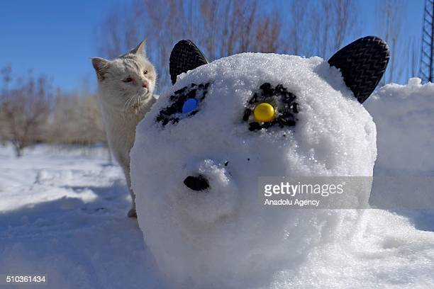 A 'Van cat' stands behind a panda shaped snow pile made by a father to entertain his kids in Turkey's eastern province Van on February 15 2016 Van...