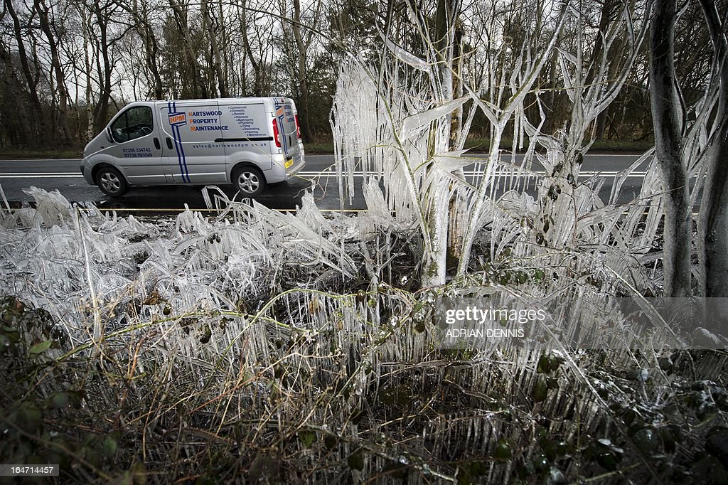 A van passes a section of ice-covered hedgerow caused by a water splashed from the roadside near Hazeley Bottom, south of Reading on March 27, 2013. Britain is in the grip of what the media has dubbed 'Miserable March', an unseasonal cold snap that threatens to bring the UK a White Easter.