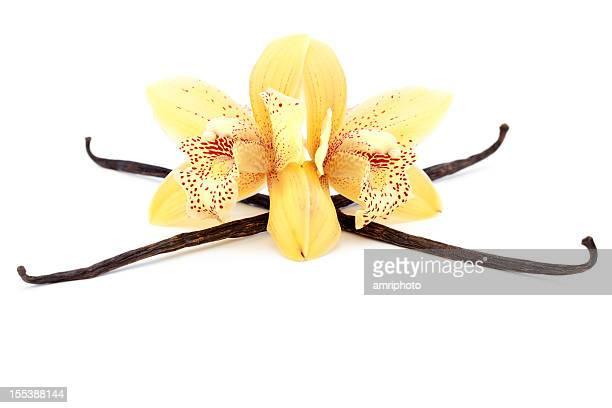 Vanilleschote mit schönen Blüten