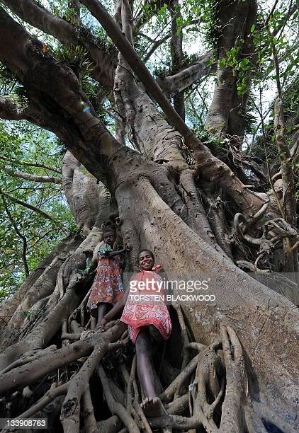 STORY 'VanuatuBritainreligionroyalsFEATURE' by Madeleine Coorey Tannese children climb a banyan tree used for kava ceremonies in the remote village...
