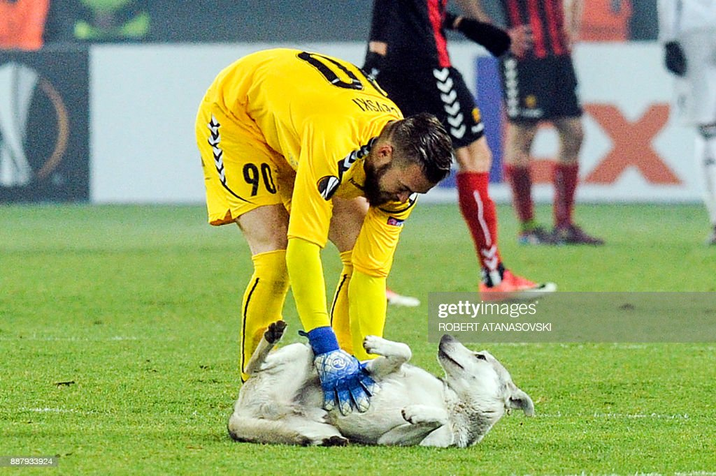 Vardar's goalkeeper Filip Gacevski tries to move a dog off the pitch during the UEFA Europa League group L football match between FK Vardar and Rosenborg BK at the Filip II Arena in Skopje on December 7, 2017. / AFP PHOTO / Robert ATANASOVSKI