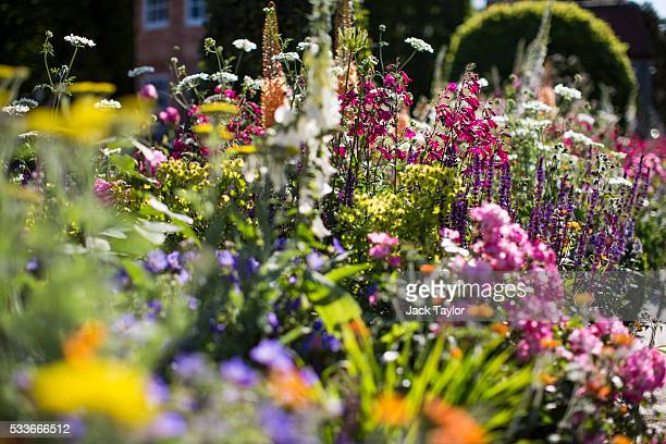 Varieties of flowers on display at 'The Harrods British Eccentrics Garden' at the Chelsea Flower Show on May 23 2016 in London England The...