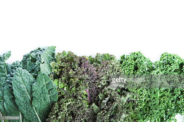 Varieties of Fresh Kale on White Background with Copy Space