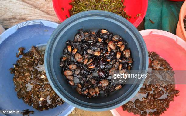 Varieties of insect are put on for sale at a market in Dimapur India north eastern state of Nagaland on Wednesday 22 November 2017