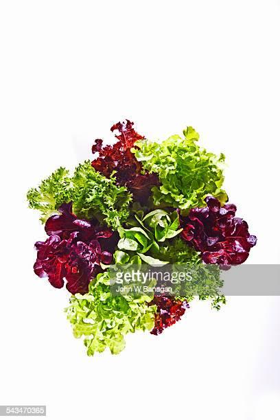 Varieties of lettuce in pot