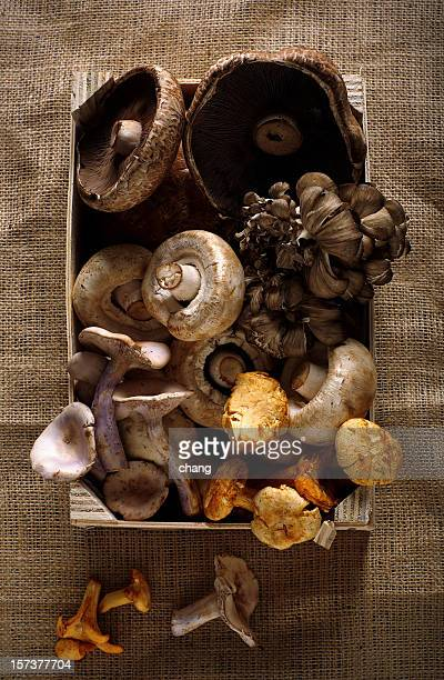 varieties of mushrooms