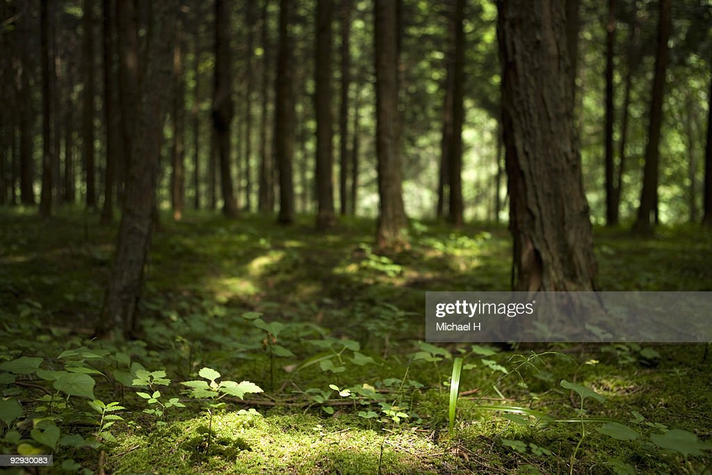Variety in deep forest : Stock Photo