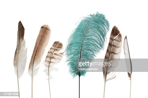 Variety of beautiful feathers against a white background : Stock Photo