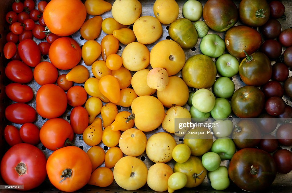 Variety of fruits : Stock Photo
