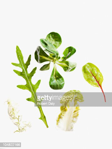 Variety of green leaf lettuce : Stock Photo