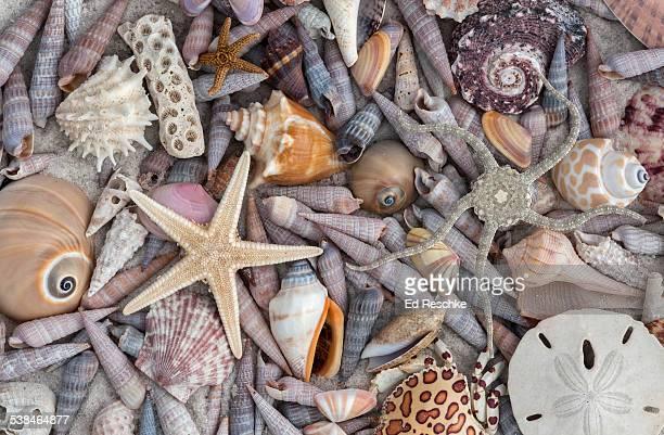 A variety of Gulf Marine Organisms Florida