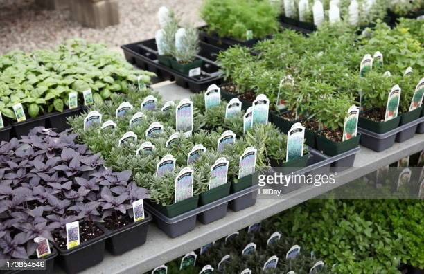Variety of Herbs for Sale