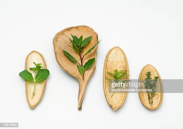 Variety of herbs on an assortment of dried husks