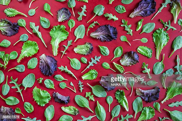 Variety of leaf lettuces forming a pattern