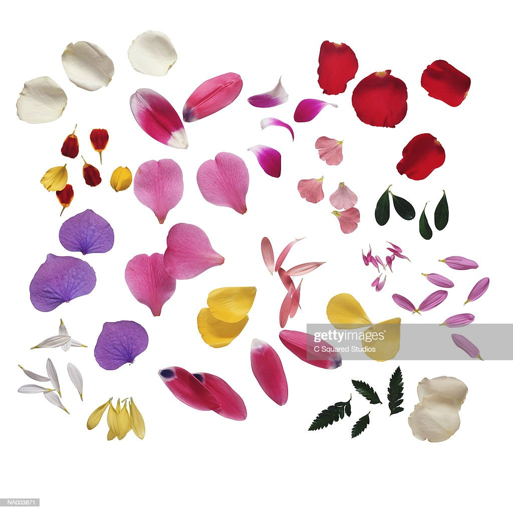 Variety of Petals : Stock-Foto