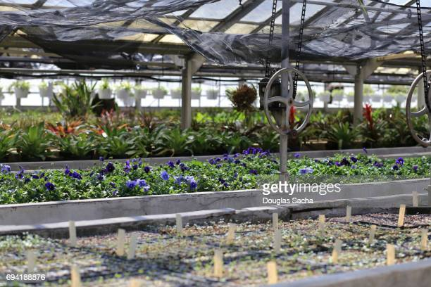 Variety of plants growing in an indoor greenhouse