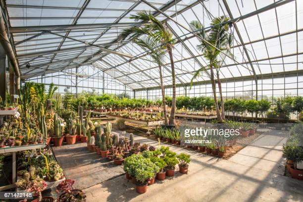 Various cactus plants growing in garden center