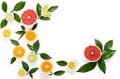 Border of citrus fruits (orange, lemon, lime, grapefruit) with leaves isolated on white background.