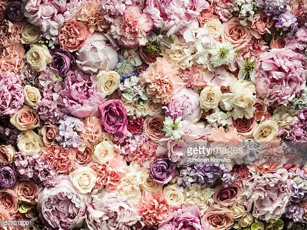 Various cut flowers