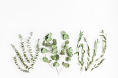 Dried eucalyptus. Various eucalyptus branches on white background. Flat lay, top view