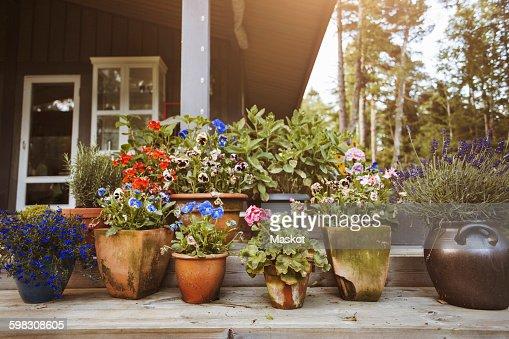Various flower pots at yard