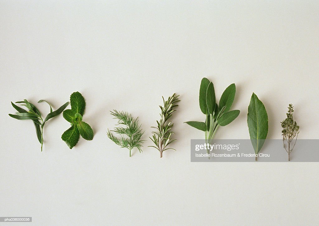 Various herbs, lined up horizontally, white background