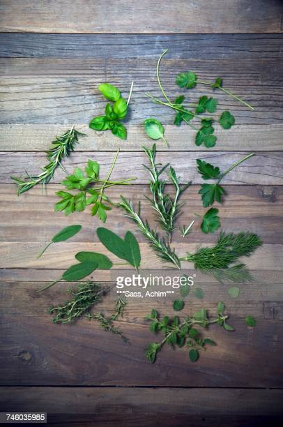 Various herbs (parsley, dill, oregano, thyme, sage, rosemary, lovage, coriander, basil) on a wooden surface