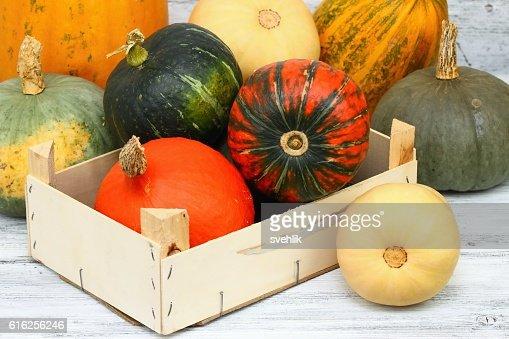 Vários tipos de abóboras : Foto de stock