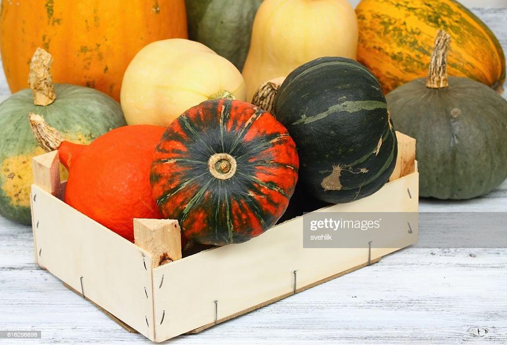 Diferentes tipos de pumpkins : Foto de stock
