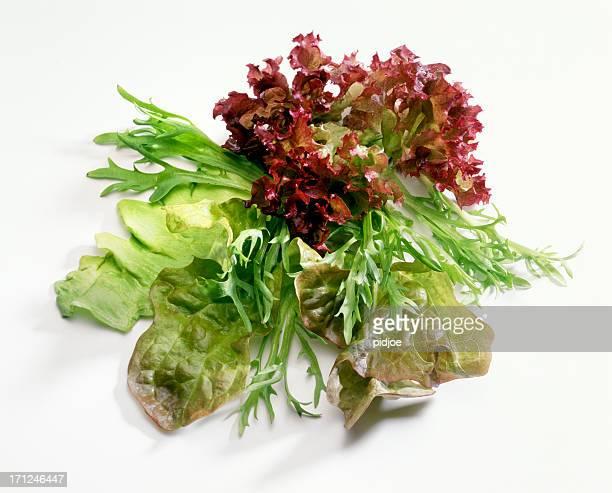 Différents types de Feuille de salade