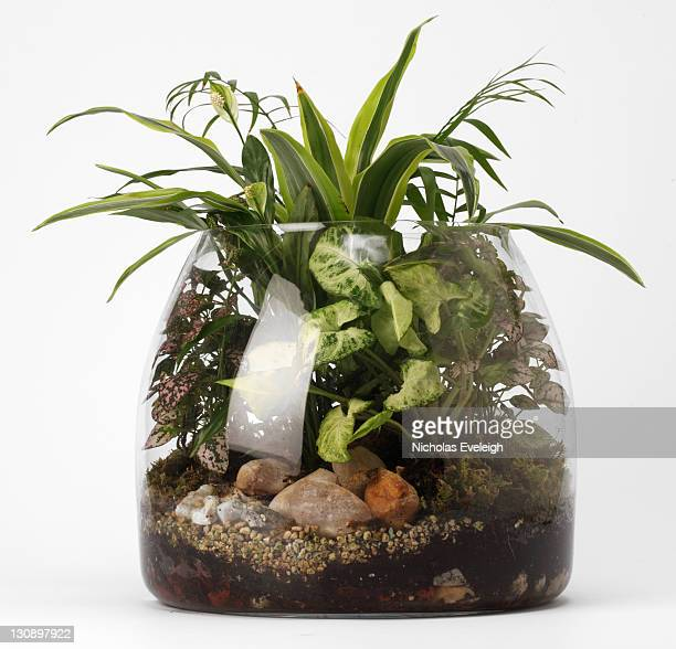 Various plants in a glass dome