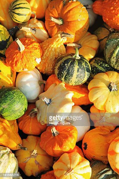Various shapes and sizes of pumkins or squashes