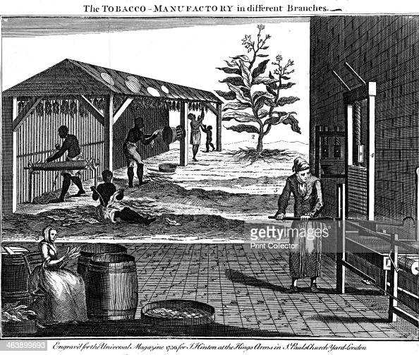 Various stages in the production of tobacco Virginia USA 1750 Male female and child slaves rolling dried tobacco into ropes and sorting leaves and...