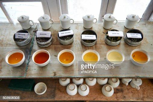 Various tea samples on display