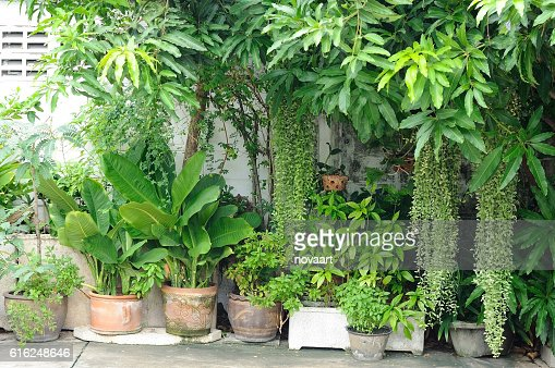 Various trees and plants species in backyard decorations : Foto stock