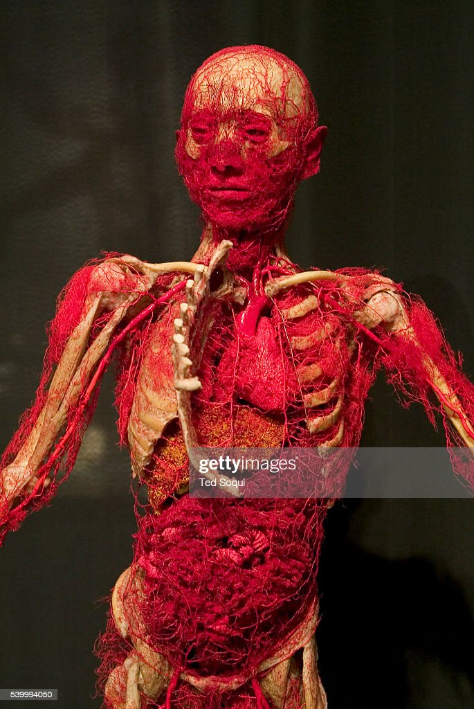 Vascular view of the human body on exhibit at the American premiere of 'Body Worlds The Anantomical Exhibition of Real Human Bodies' at the...