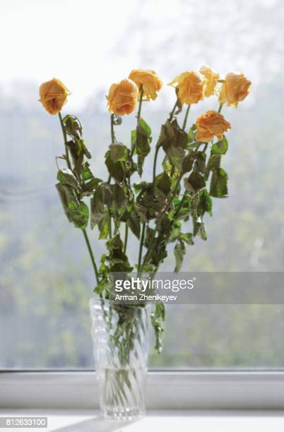 Vase of dried roses at the window