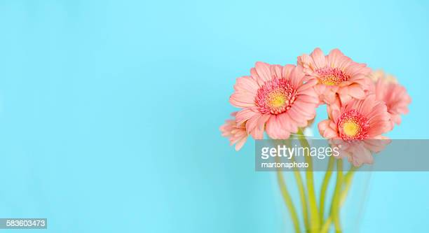 Vase of pink flowers on turquoise background