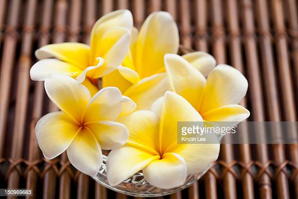 Vase with plumeria bouquet