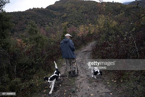 Vassilis Goulandas and two hunting dogs look for truffles in the Mount Olympus forest on November 14 2013 One product attracting increasing attention...