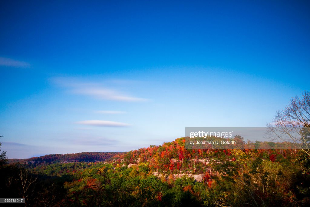 Vast forest covered in Fall
