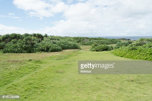 Vast grassland : Stock Photo